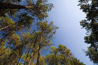 Forestry_Pic